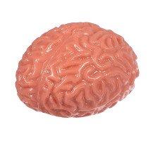 Игрушка-антистресс Мозги